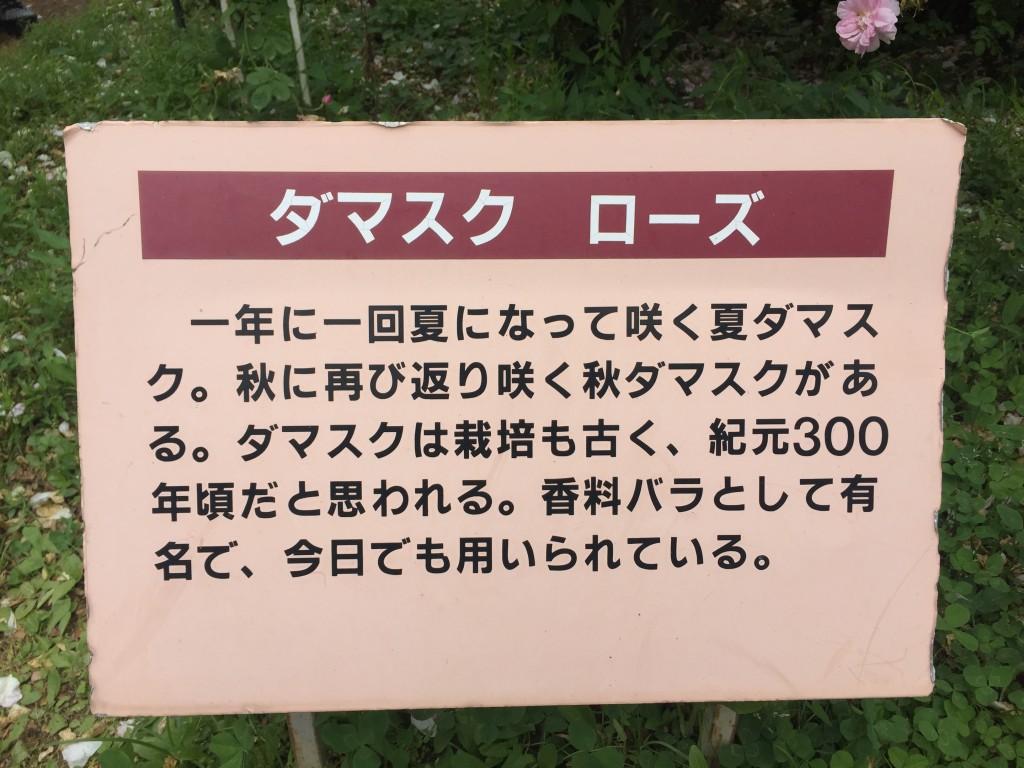 ダマスクローズの詳細